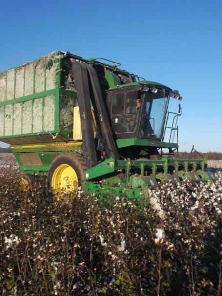 cotton harvest Alabama