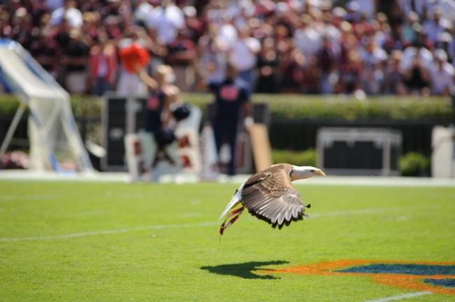 Eagle Flight Auburn