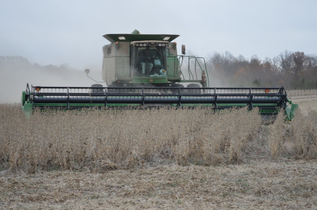 soybeans combine harvest